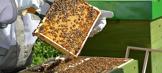 October 20, 2020: Six months of bees at BLOCK